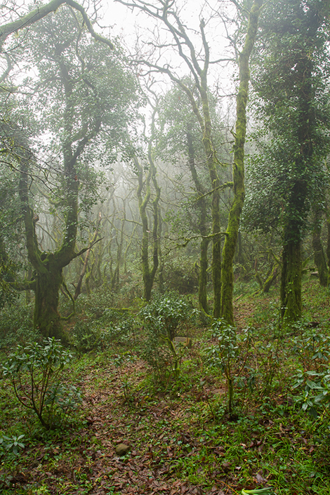 bosque-1-2