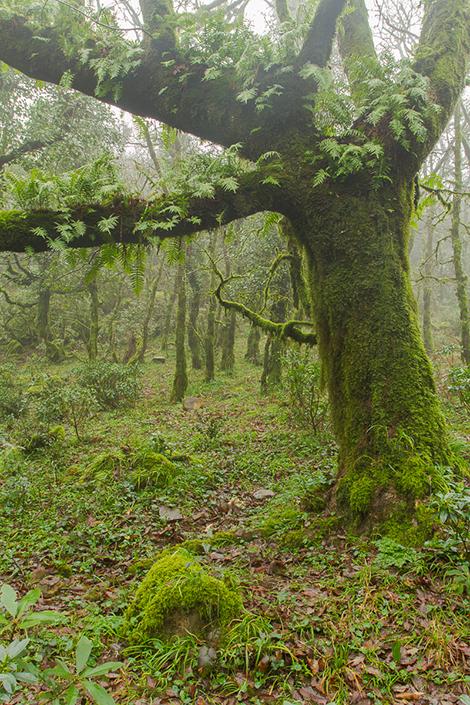 bosque-1